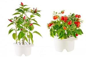 Новый тренд в сфере ботаники - умный цветок Click and Grow