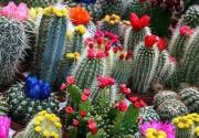 Где в Киеве продают дешевые цветы?