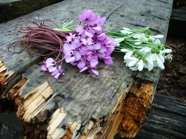 В течение трех месяцев будут проводить проверки в местах продажи растений и цветов