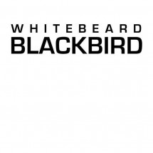 Whitebeard Blackbird