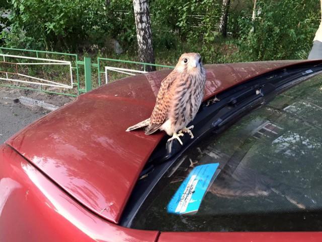 Птица приземлилась на балкон жителей столицы