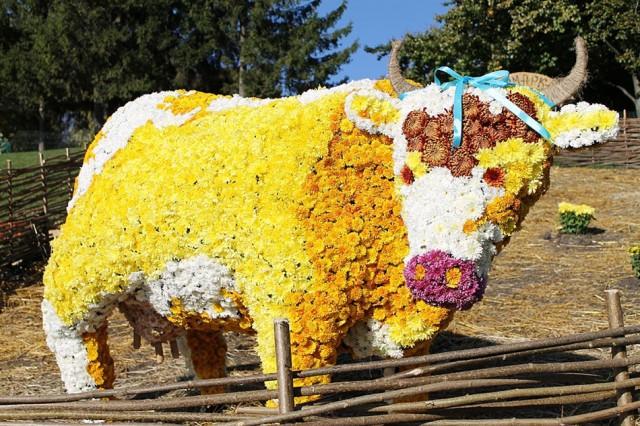 "Цветочный фестиваль ""Квітковий оберіг"" на Певчем поле с 21 августа. Фото с сайта kievcity.gov.ua"