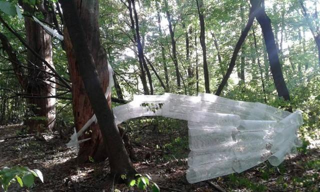 В интернет попали снимки новой арт-инсталляции в Голосеевском парке