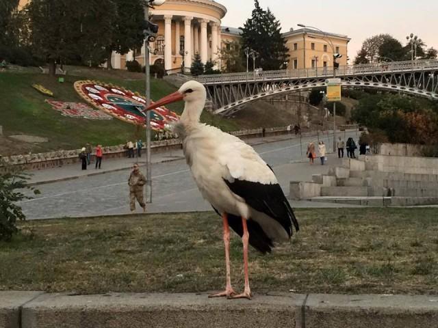 Птицу заметили в районе Майдана Незалежности