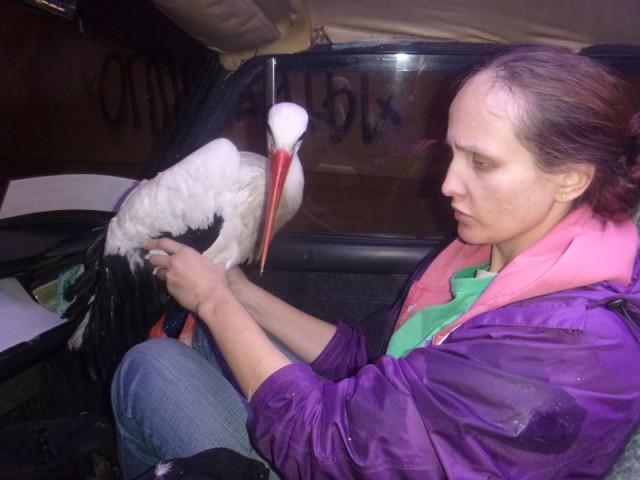 На Майдане птицу кормили сосисками и колбасой