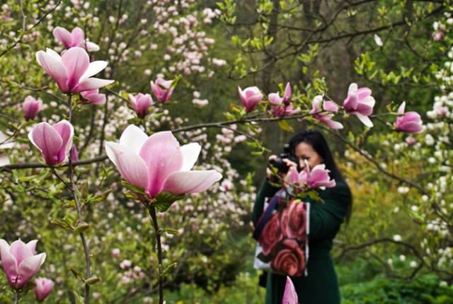 Сад будут обустраивать на заброшенной территории Русановского канала
