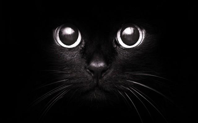 Ко дню Всех Святых проведут Международную выставку породистых кошек