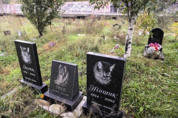 сегодняшний день можно ли хоронить собак на человеческом кладбище тренировочным