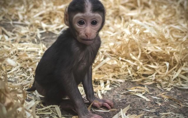 Работники зоопарка подготовили для гостей список подарков, которые можно приносить обезьянам