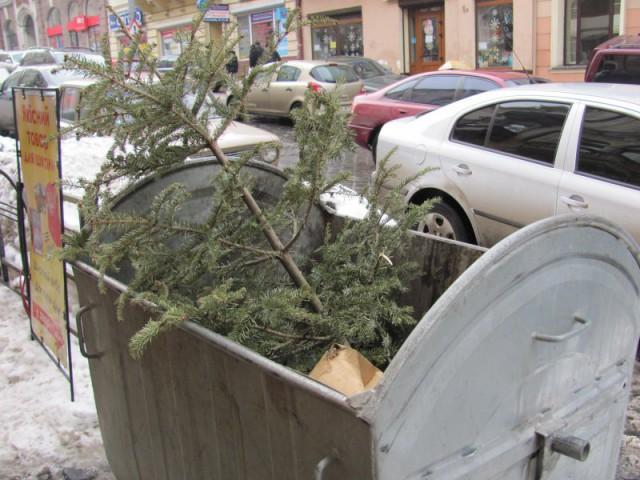 Переработанную древесину в дальнейшем используют для мульчирования лунок вечнозеленых растений