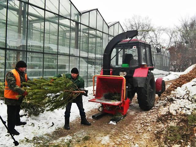 В городе работают пункты приема елок и сосен