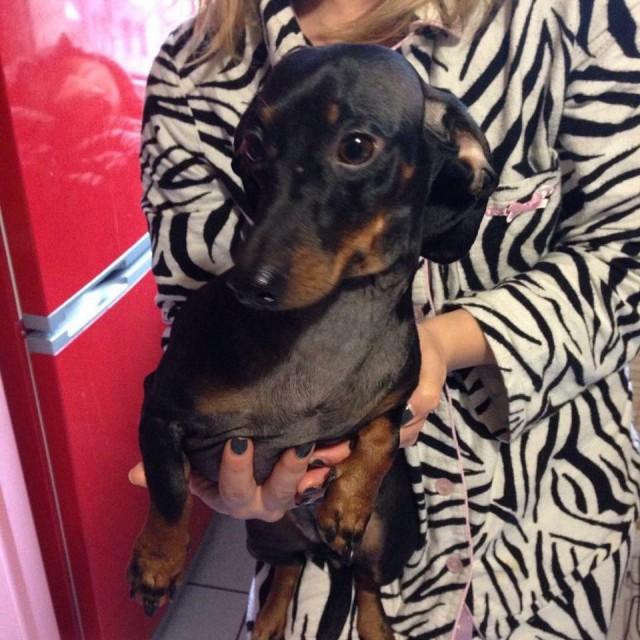 Симпатичного пса нашли на Подоле