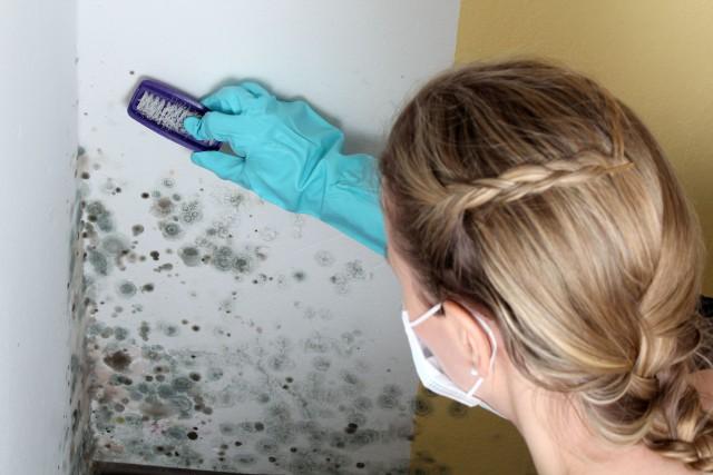 Строения разъедают токсические грибки