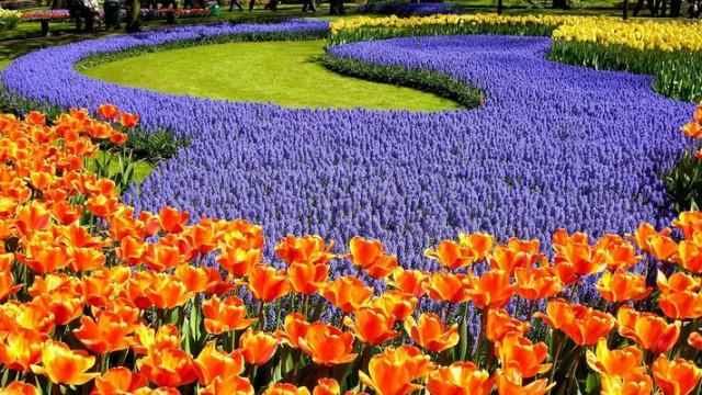 КО «Киевзеленстрой» обнародовал график проведения больших цветочных выставок