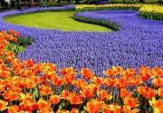 На Певческом поле пройдет шесть цветочных фестивалей