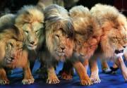 В украинских цирках не будет животных