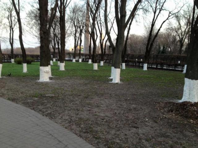 А дерева у парку Слави у Києві без білої фарби з'їдять шкідники