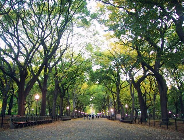 Централ парк у Нью-Йорку обходиться без побілених дерев