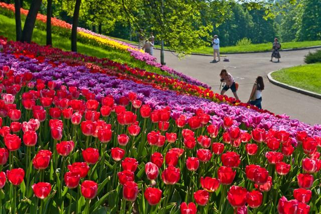 20 апреля на Певческом поле «Киевзеленстрой» откроет экспозицию «Цветущие реки»