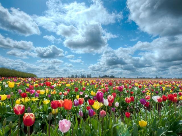 Парк оделся в яркие весенние цвета