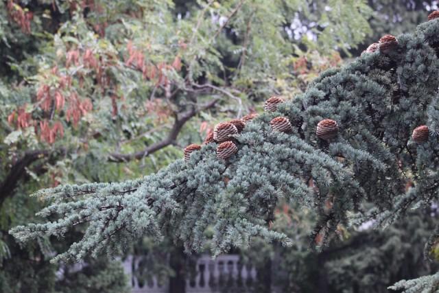 23 апреля в Киеве на территории Экспоцентра Украины начнут посадку деревьев