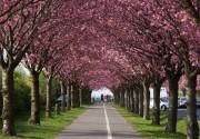 ТОП-10 парков Киева, в которых стоит погулять весной (фото)