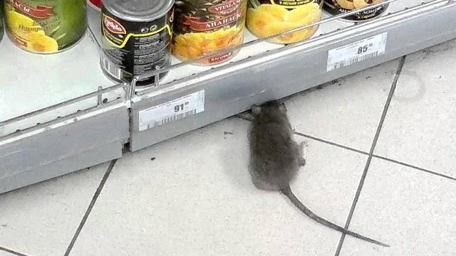 Магазин начал бороться с грызунами только после резонансную в социальной сети
