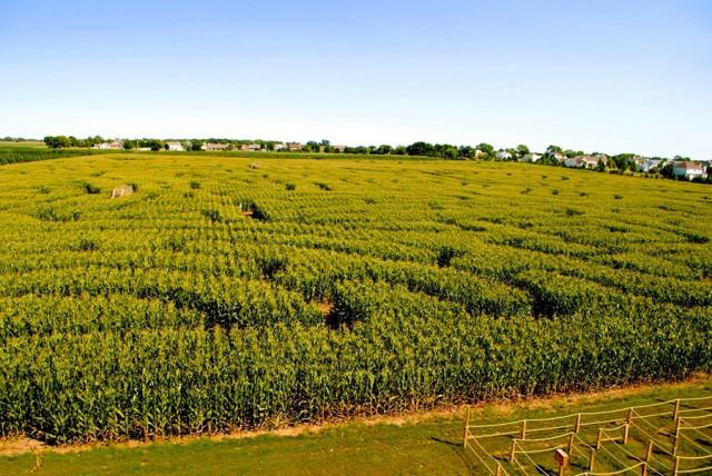 15 июля в столице откроет свои двери агропарк, партнером которого выступает мировой производитель сельхозтехники New Holland