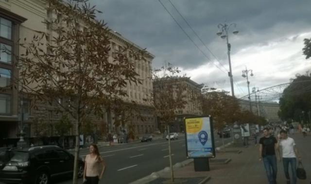 """Деревья сорта """"Бриоти"""" стоили 430 евро в 2013 году"""