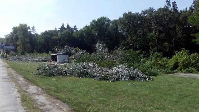 """Ночью 22 августа неизвестные уничтожили часть заповедного урочища «Бычок», входящей в состав Национального природного парка """"Голосеевский"""""""