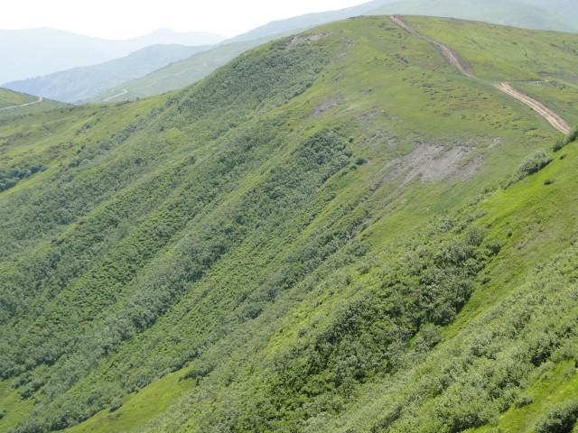 Вот здесь, по мнению чиновников, крестьяне будут заниматься огородничеством и садоводством. Фото: drago-brat.com