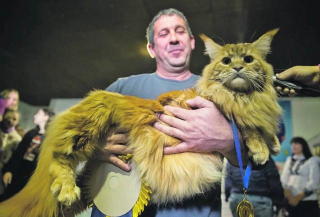 Чемпион весит почти 12 килограмм