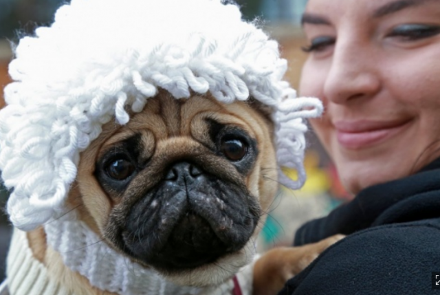 Собаки с хозяевами готовились к Хеллоуину