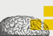 Шевели мозгами: лучшие образовательные мероприятия ноября