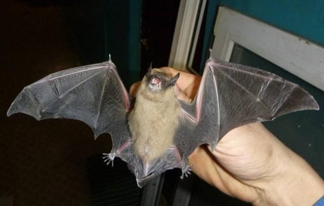 Животные случайно залетают в квартиры