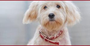 Усы, лапы и хвост – вот мои документы: приюты для животных Киева и области