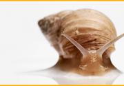 5 самых популярных компонентов животного происхождения в вашей баночке с кремом