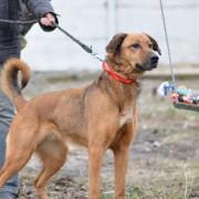 Киевлянка два месяца ищет пропавшую собаку Фасоль
