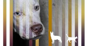 Город для бездомных животных: проблемы и их решения
