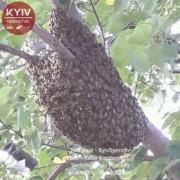 На улице Академика Вербицкого жители обнаружили рой пчел на дереве (ФОТО)