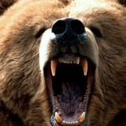 В Белой Церкви медведь напал на зрителей во время представления в цирке (ВИДЕО)
