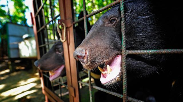 В Украине запретили использовать диких животных в цирках-шапито