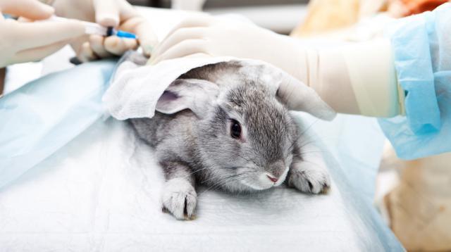 Известные косметические бренды все еще тестируют продукцию на животных. Если верить Daily Mail
