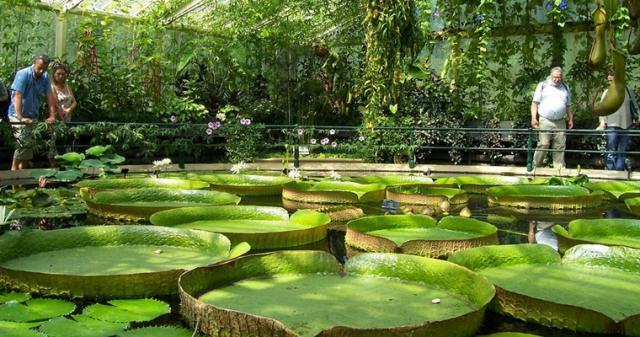 Оранжерея ботанического сада им. Гришко
