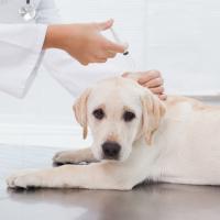 Бесплатно: в Голосеевском районе будут делать прививки животным от бешенства