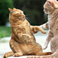 В Киеве пройдет международный бал котиков