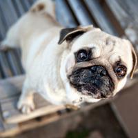Вход свободный: в Киеве пройдет выставка собак