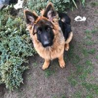 Киевлянину вернули украденного два месяца назад пса. Фото, видео