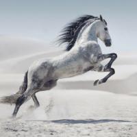 В столице пройдет выставка редких пород лошадей