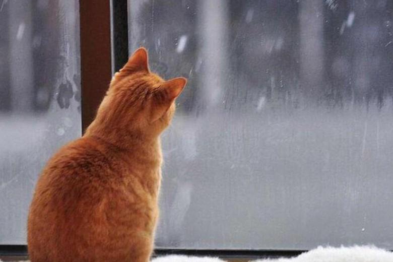 Стало известно, какая погода ожидает киевлян завтра